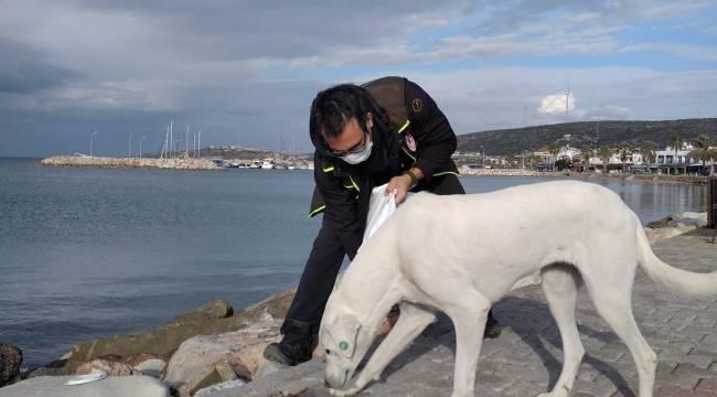 Sokak Hayvanlarına 100 Ton Mama Dağıtıldı